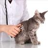 Ветеринарные клиники в Облучье